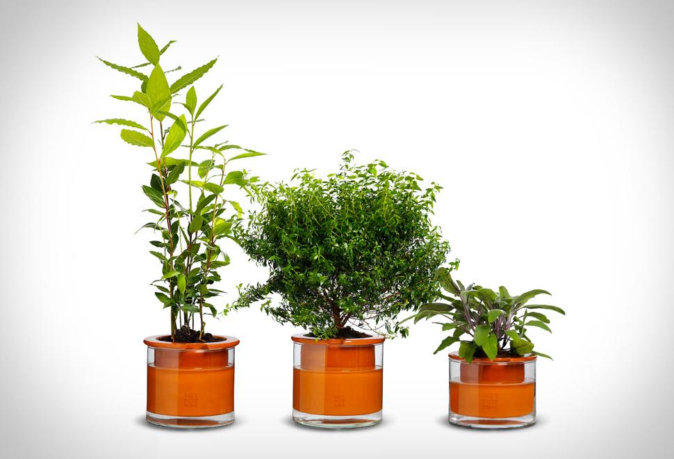 self-watering-pots.jpg
